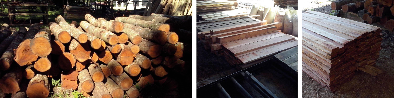 Mahagonibäume  Factsheet Lucrecia – tree value forestry GmbH Oberursel